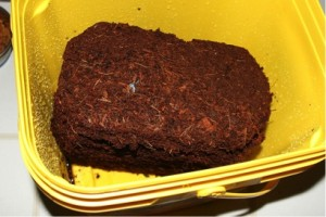 Figure 1. A typical coco coir in a mid-size container.