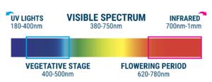 Light Cycle Basics